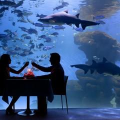 Palma Aquarium a Palma di Maiorca