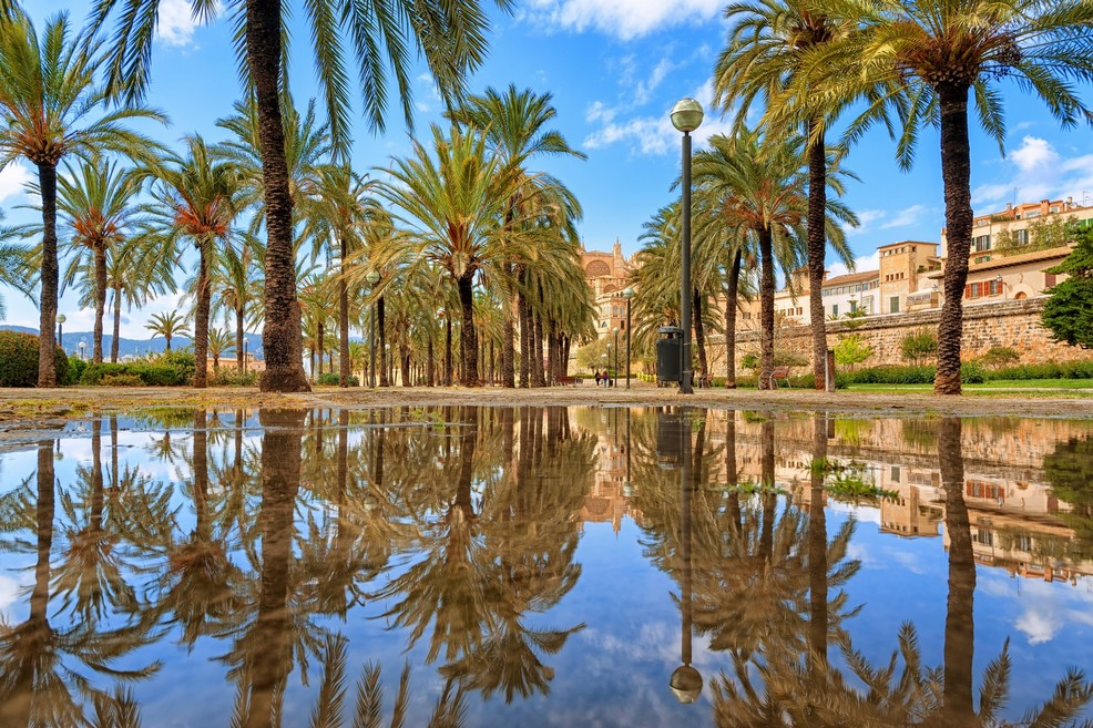 Maiorca Palm tree grove in Palma de Mallorca
